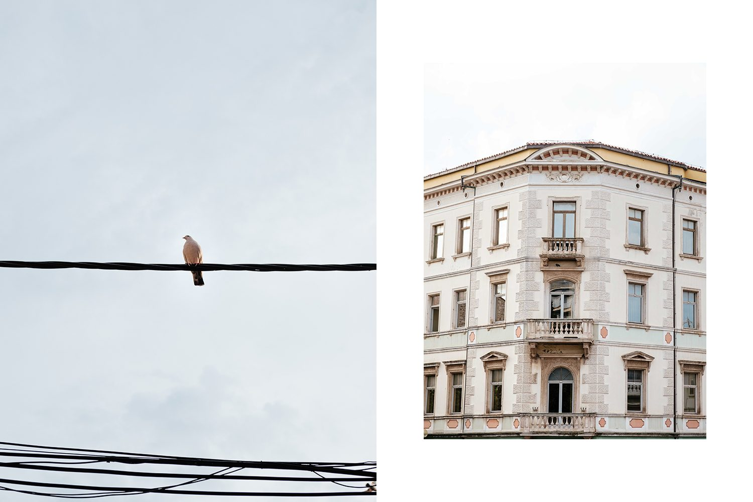 Bird and building