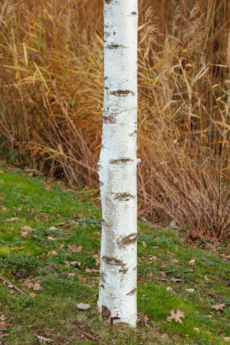 Tronc d'arbre avec herbe